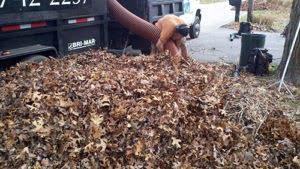 Fall Cleanup RI