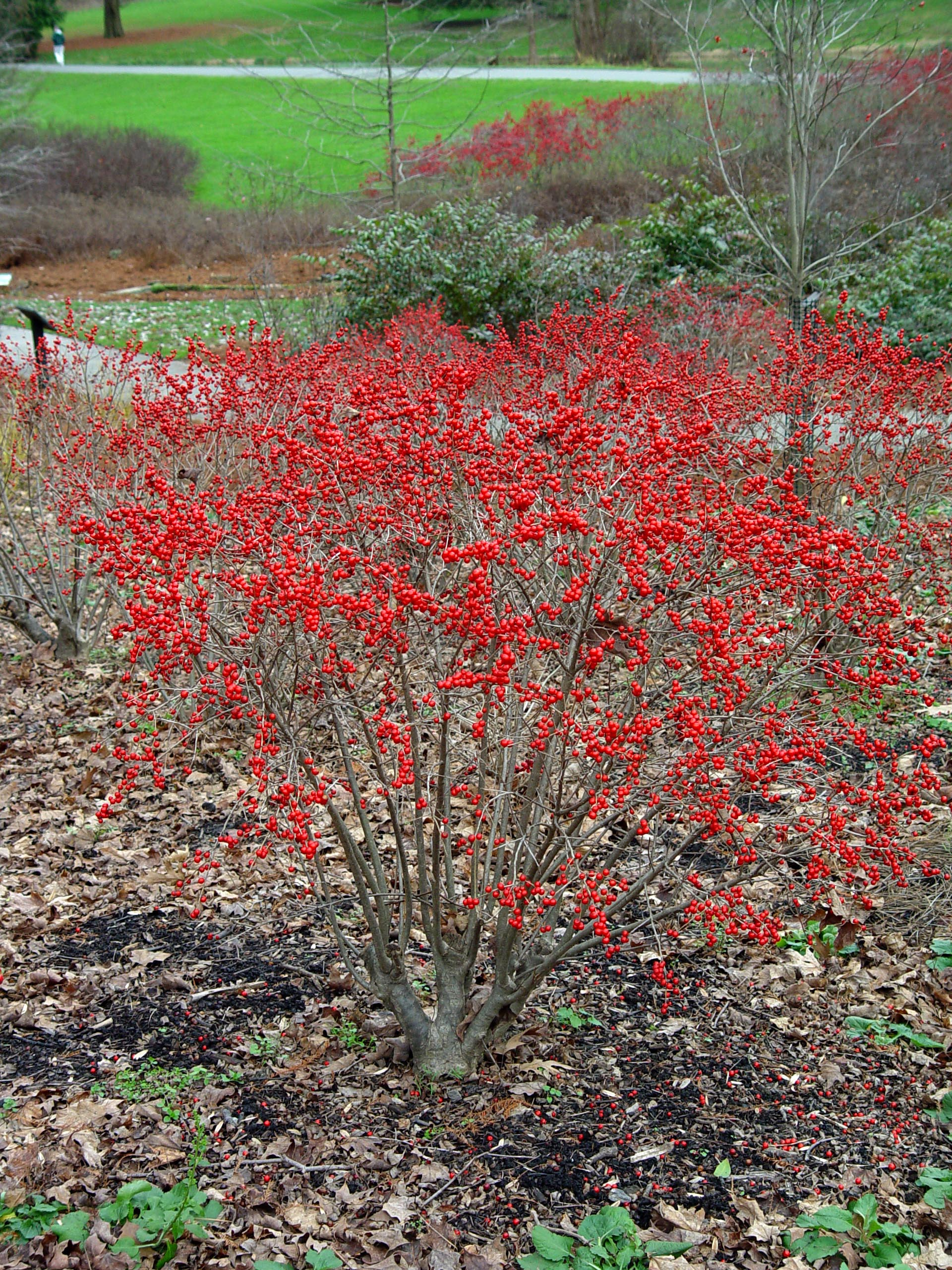 7 Best Native Plants For Southern Rhode Island A Cut