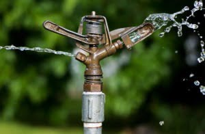Watering Advice