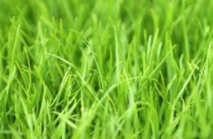 grass header