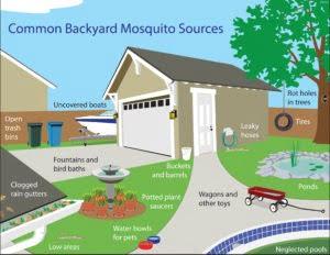 Mosquito Sources