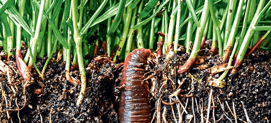 Earthworms are among the many types of organisms that can be beneficial to sustained soil health.