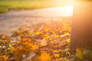 Fall cleanups RI