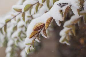 Snow in RI